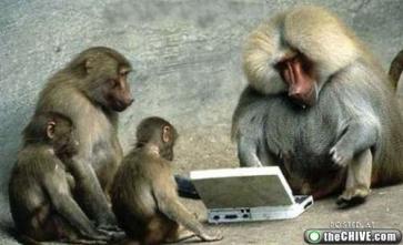macacos ladrones